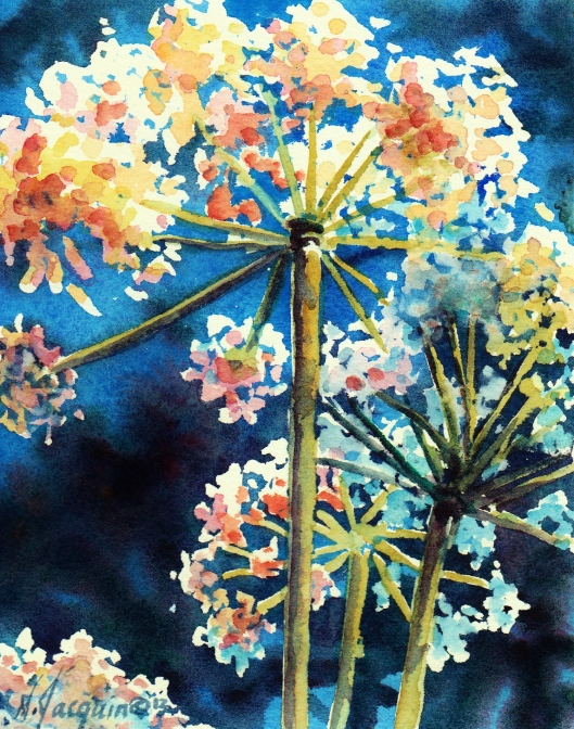 Cow-parsnip watercolour N.Jacquin copyright 2012