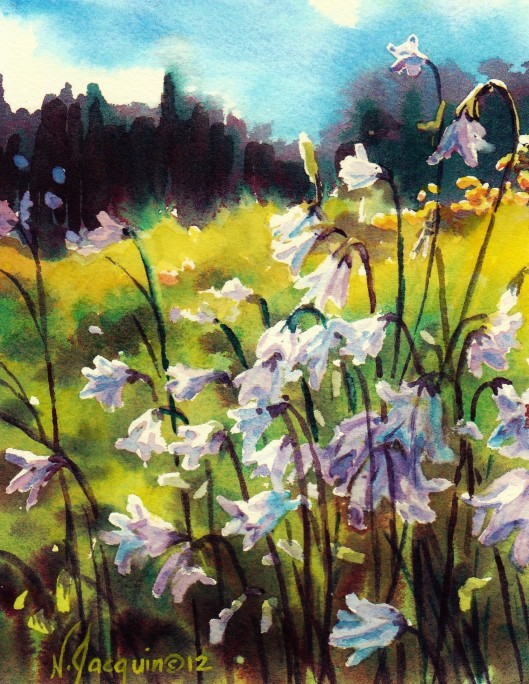 Harebell watercolour N.Jacquin copyright 2012